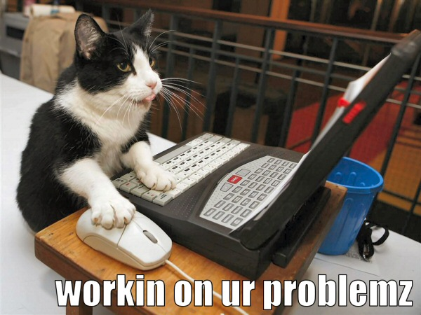 a busy cat